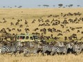 Top Five Safari Destinations