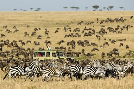 Safari in National Park