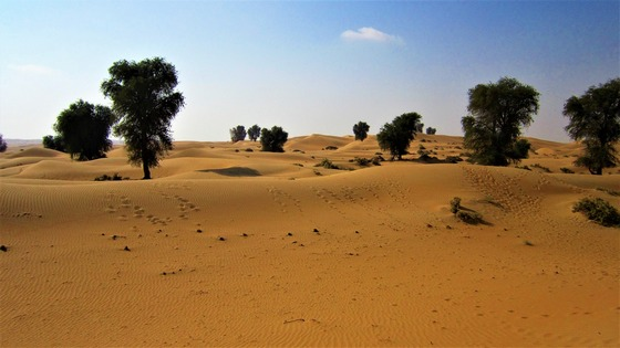 Rare trees and vegetation in Dubai desert