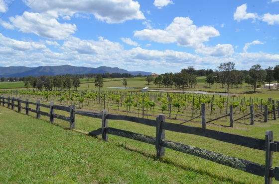 Sydney's vineyard region of Hunter Valley