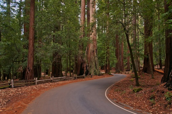 Redwoods National Park in California