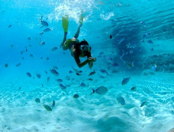 Snorkelling with fish at Bora Bora