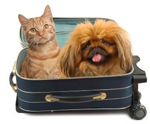 Cat and dog ready to travel