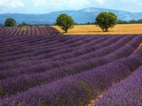 Beautiful Places in Provence