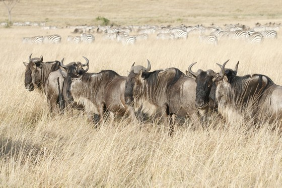 Herd of wild animals in African prairie