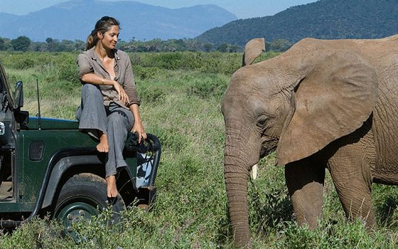 Woman sitting on a jeep, observing an elephant at safari