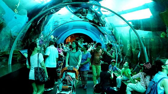 Visitors at the S.E.A. Aquarium in Singapore